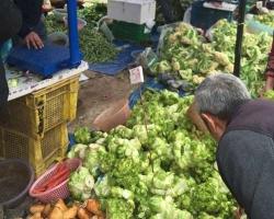 重庆菜市场蔬菜配送